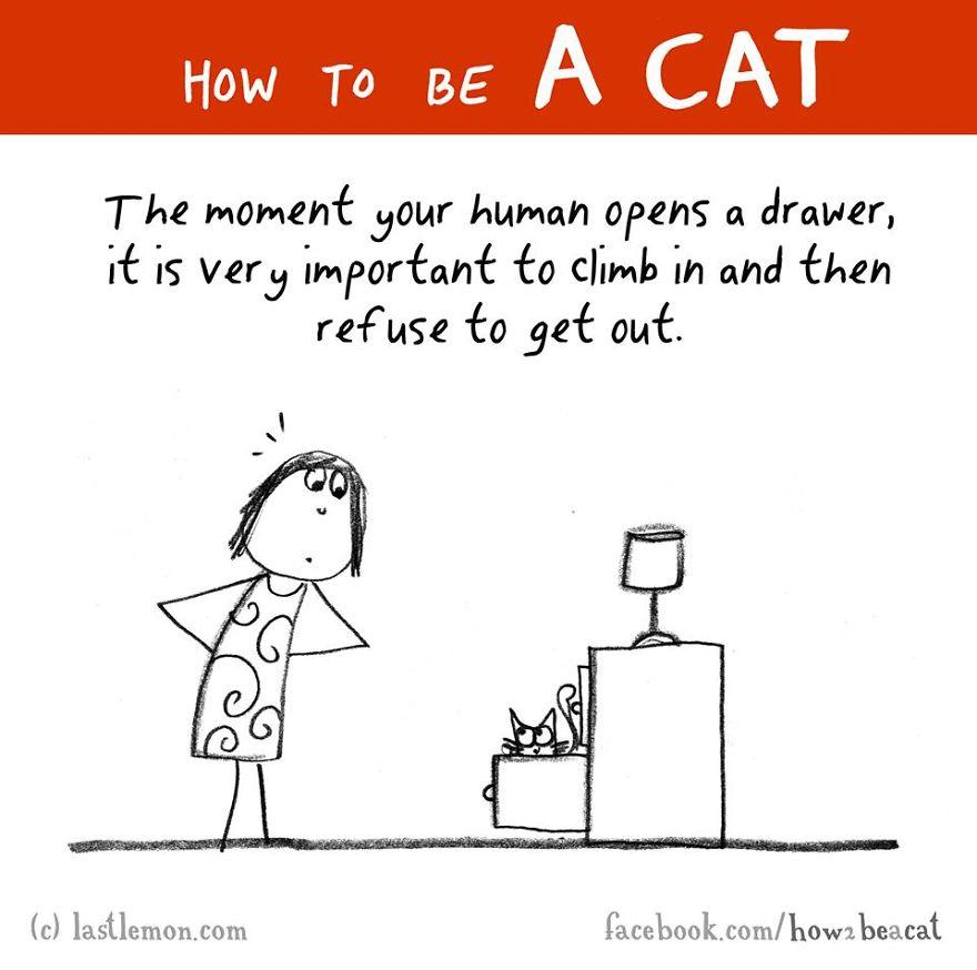 """""""Quando il tuo umano apre un cassetto, e' molto importante tuffarsi dentro e rifiutare poi di uscire."""""""