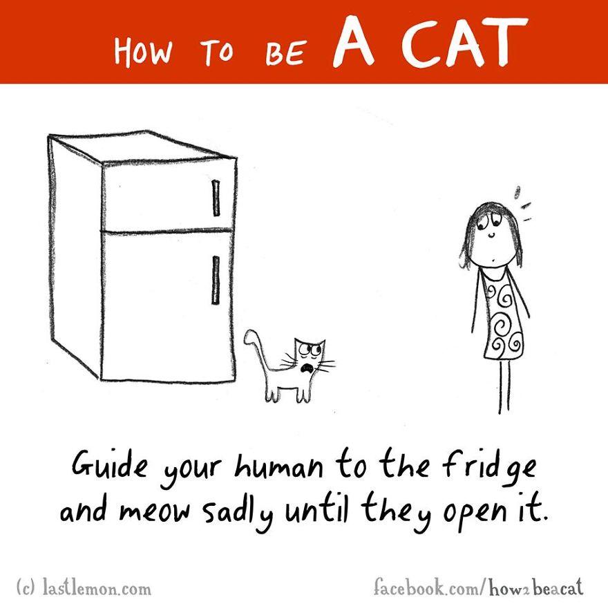 """""""Conduci il tuo umano al frigorifero e miagola tristemente fino a quando non l'abbia aperto."""""""