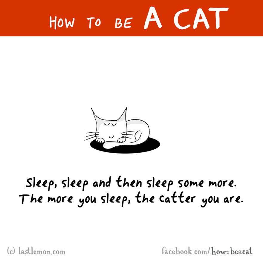 """""""Dormi, dormi e poi dormi sempre di più. Più dormi, più gatto sei."""""""