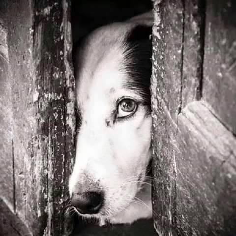Stare con gli animali ci insegna che le cose più belle sono le piccole cose: le cose più semplici, l'amore e la tolleranza. E in fondo basta una carezza a far toccare il cielo... _ Rocco Fierro _ Immagine reperita nel web