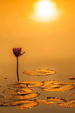 Il coraggio di starsene soli come se gli altri non ci fossero e pensare soltanto alla cosa che fai. _ Cesare Pavese _ Immagine reperita nel web
