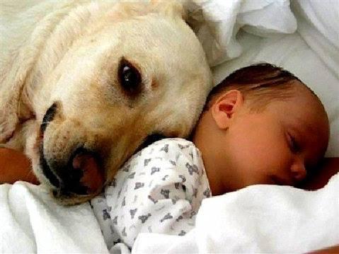 Animale è chi li sfiora, anche solo con il pensiero. (Cit.) Immagine reperita nel web.