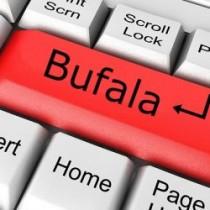 bufala 14