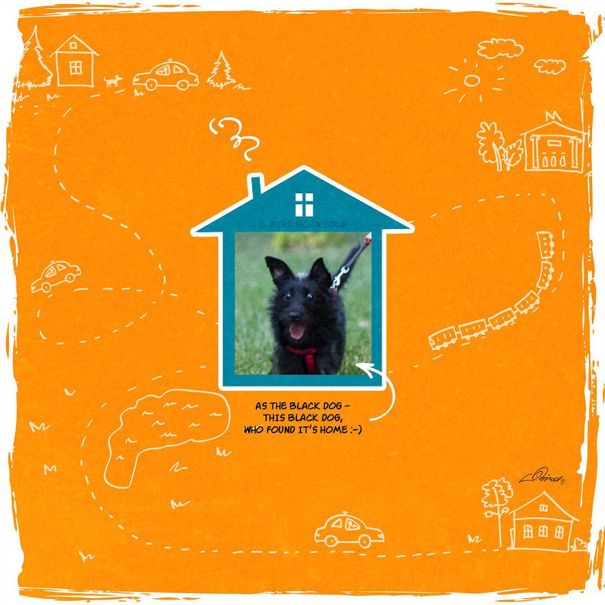 """""""Come la cagnolona nera, questa cagnolona nera che ha trovato la sua casa :) """"."""