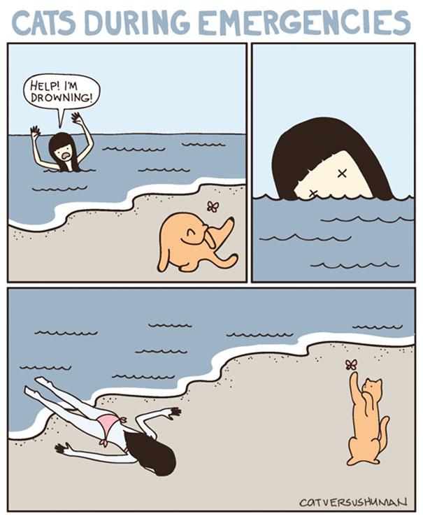 """I gatti durante le emergenze. """"Aiuto! Sto annegando!"""""""