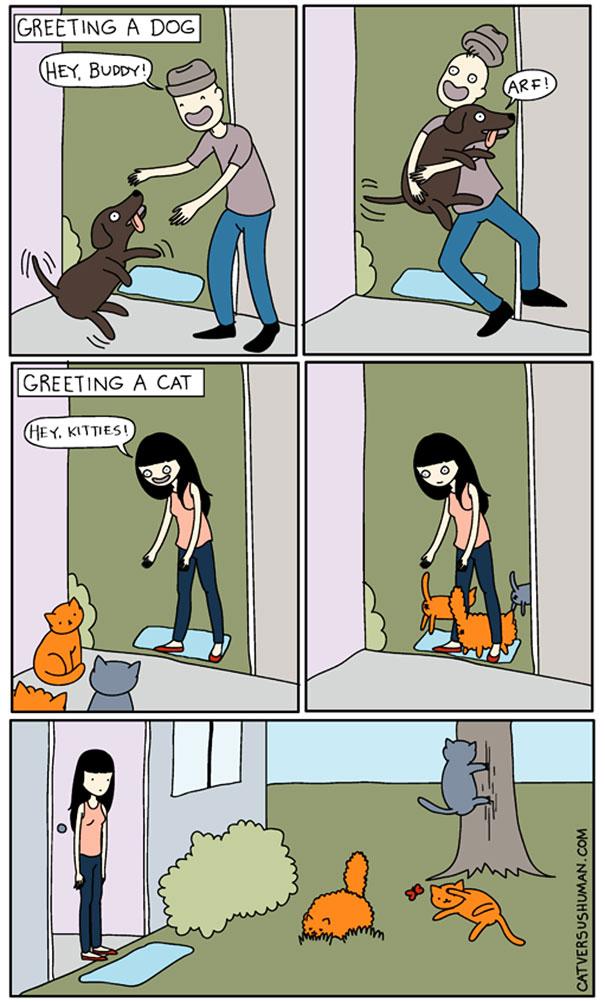 Salutare un cane. Salutare un gatto.