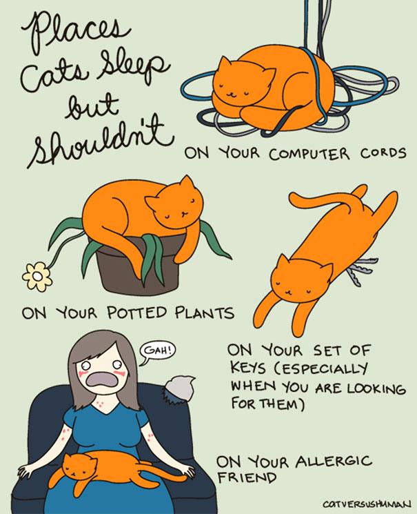 """""""Posti in cui i gatti dormono, ma non dovrebbero... Sui fili del tuo computer Sulle tue piante. Sul tuo mazzo di chiavi (specialmente quando tu li stai cercando) Sulla tua amica allergica."""