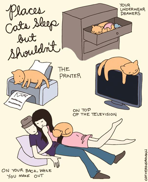 Posti in cui i gatti dormono ma non dovrebbero I tuoi cassetti di biancheria intima. La stampante. Sopra la televisione. Sulla tua schiena quando stai amoreggiando.