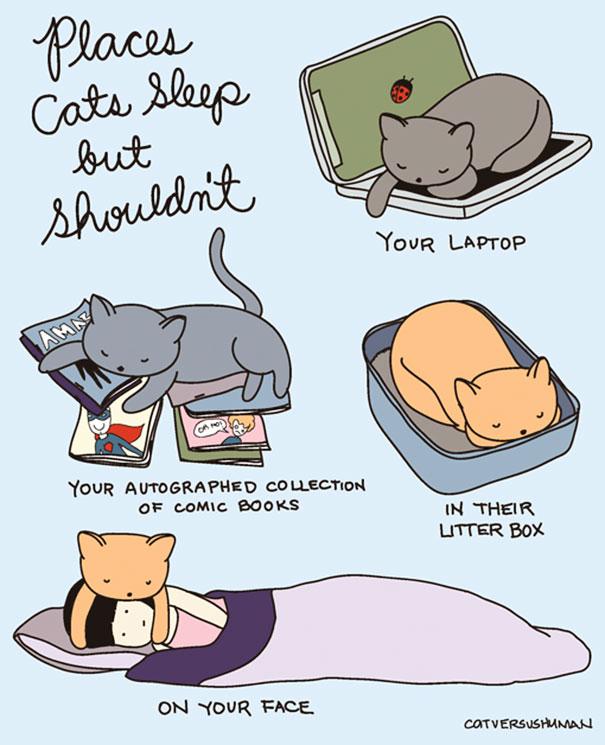 Posti dove i gatti dormono ma non dovrebbero. Il tuo portatile. La tua autografata collezione di giornali a fumetti. Nella loro lettiera. Sul tuo viso.