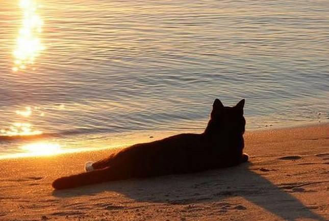 """Così tra questa immensità s'annega il pensier mio: e il naufragar m'è dolce in questo mare. Giacomo Leopardi, """"L'infinito"""". Immagine reperita nel web."""