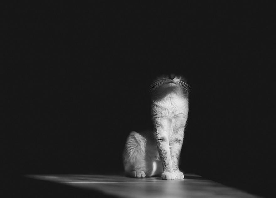foto gatto 10