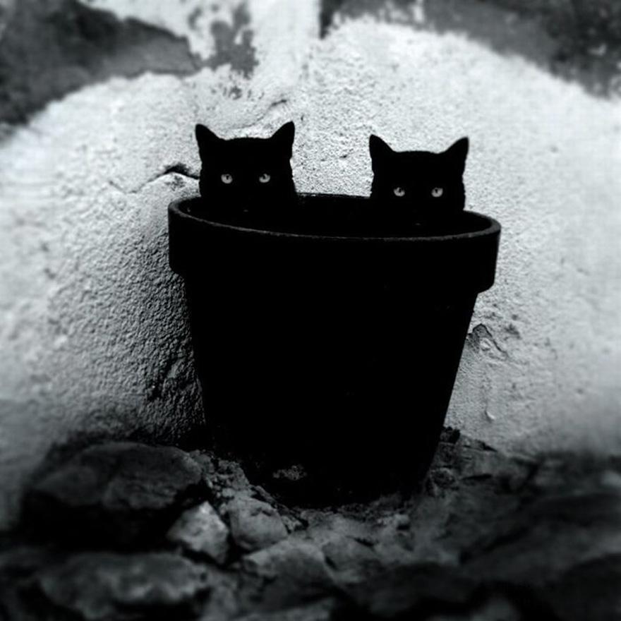 foto gatto 17