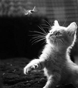 Foto di bianco micio