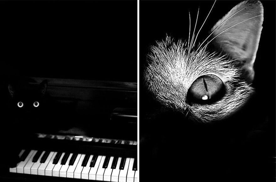 foto gatto 50