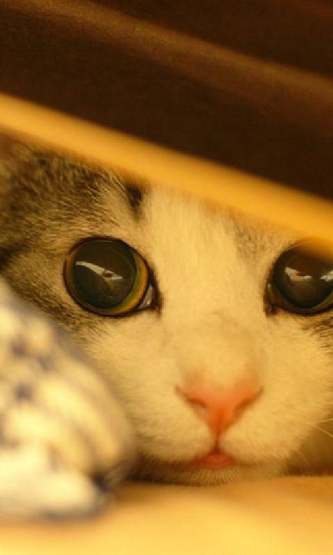 I gatti, le donne e i grandi criminali hanno questo di comune, essi rappresentano un ideale inaccessibile e una capacità di amare se stessi che li rende attraenti. _ Sigmund Freud _ Immagine reperita nel web.