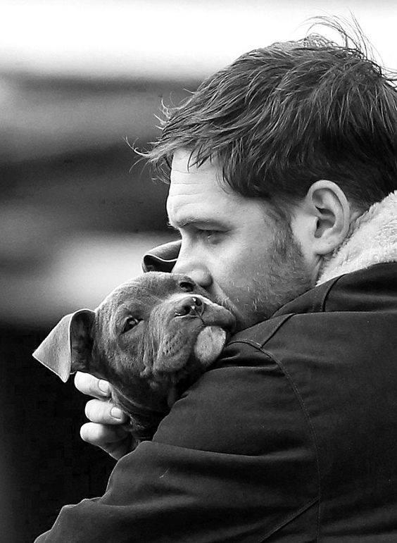 """Il cane è un santo. È schietto e onesto di natura. Sa per istinto quando non è desiderato; se ne sta accucciato quasi immobile per ore, quando il suo re sta lavorando sodo. Ma quando il suo re è triste e preoccupato, allora si alza furtivamente e appoggia il muso sul suo grembo. """"Non angustiarti. Non preoccuparti se tutti ti abbandonano. Andiamo a fare una passeggiata e dimentichiamocene"""". _ Axel Munthe _ Tom Hardy, fotografia reperita su Pinterest."""