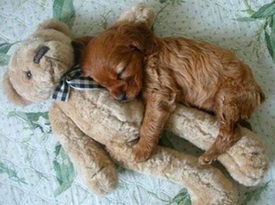Il mio piccolo cane... un battito di cuore ai miei piedi. _ Edith Wharton _ Immagine reperita nel web.