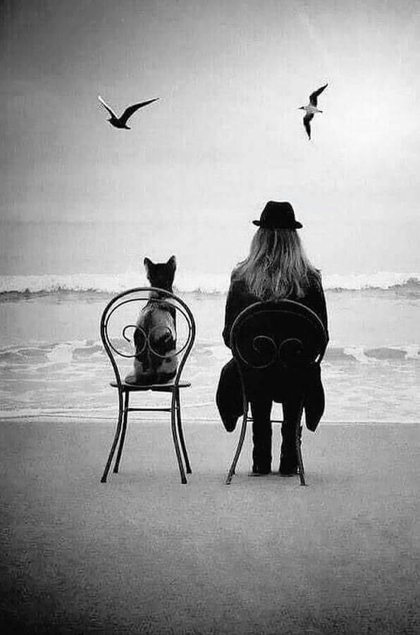 La solitudine è preziosa ma una buona compagnia non ha prezzo. (cit.) Immagine reperita nel web.