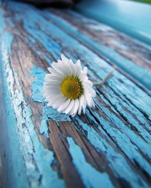 Soltanto i più forti fanno i conti con la solitudine, gli altri la riempiono con chiunque. _ Vjollca Lika _ Immagine reperita nel web.