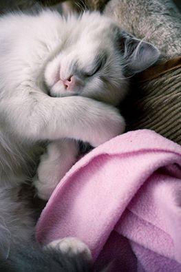Impossibile guardare un gatto che dorme e sentirsi nervosi. _ Jane Pauley _ Immagine reperita nel web.