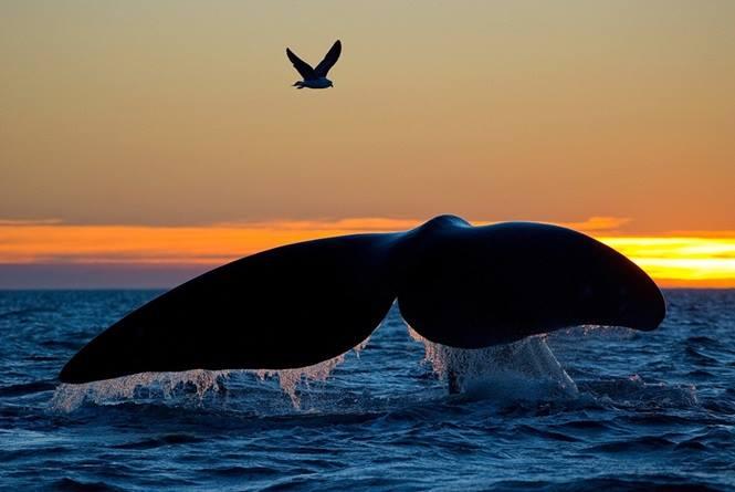 La natura genera tutti liberi, e in tutti è naturale l'amore per la libertà. _ Plauto _ Foto di Tomas Kotouc.