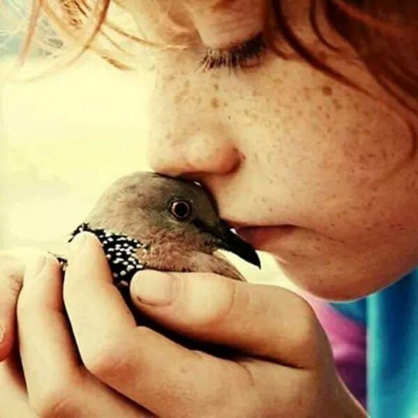 C'è chi ha il becco e chi la bocca, chi la pelle e chi le piume, ma il cuore è uguale per tutti. _ Marco Ciro Bargerri _ Immagine reperita nel web.