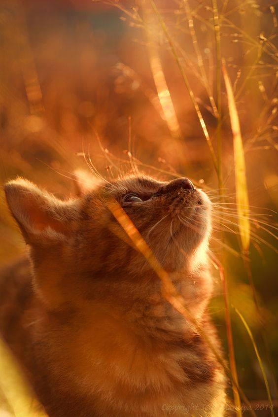 I gatti hanno sempre quell'espressione di chi ha letto Kant e l'ha capito. Cit. Foto di Seiji Mamiya.