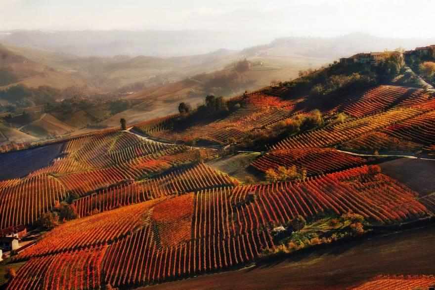 """""""Red Mist In Alba"""" di Valentina Galvagno. Un assaggio autunnale dei vigneti vicino Alba, nelle Langhe piemontesi."""