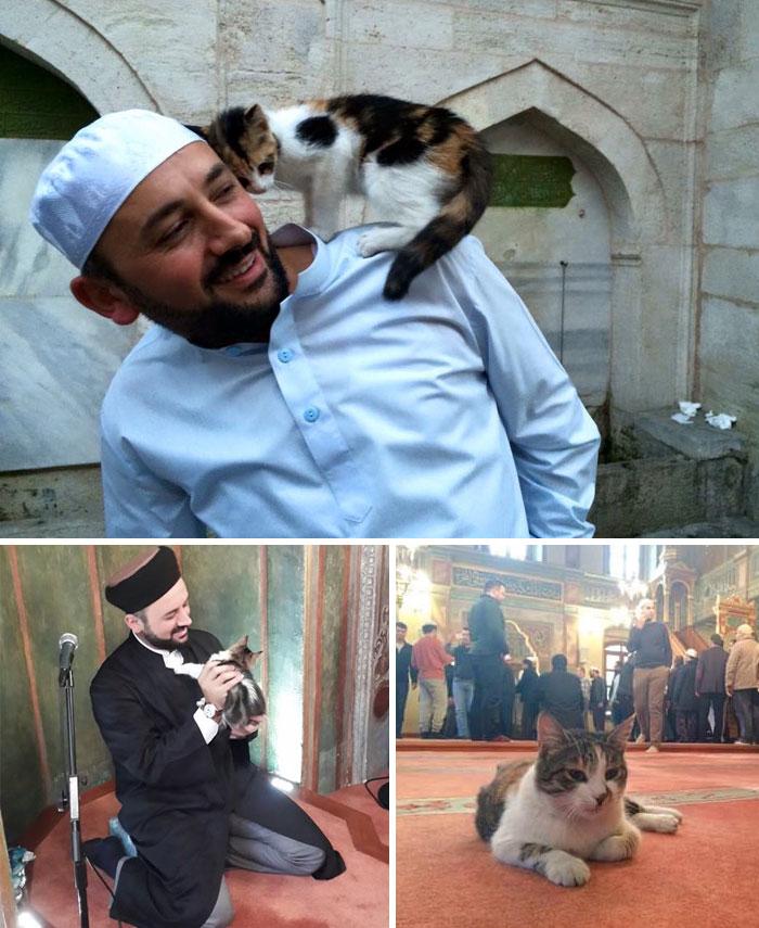 Un imam ha aperto le porte della sua moschea ai gatti randagi per poter dar loro la possibilità di stare al caldo.