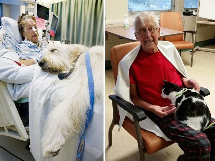 Un ospedale permette agli animali domestici di far visita ai loro amici umani malati per farli sentir meglio.