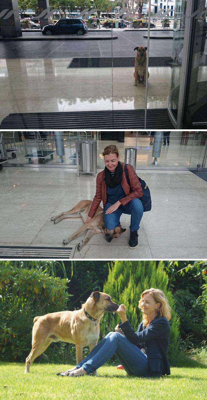 Un' assistente di volo ha adottato un cane randagio che non aveva mai smesso di aspettarla fuori dall'albergo in cui la donna alloggiava.