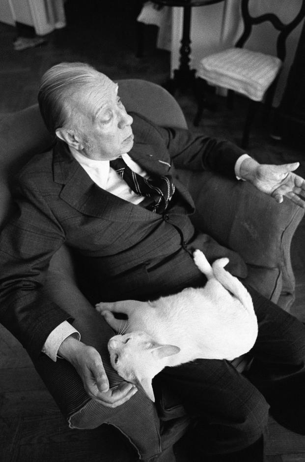 """A un gatto"""" di Jorge Luis Borges"""