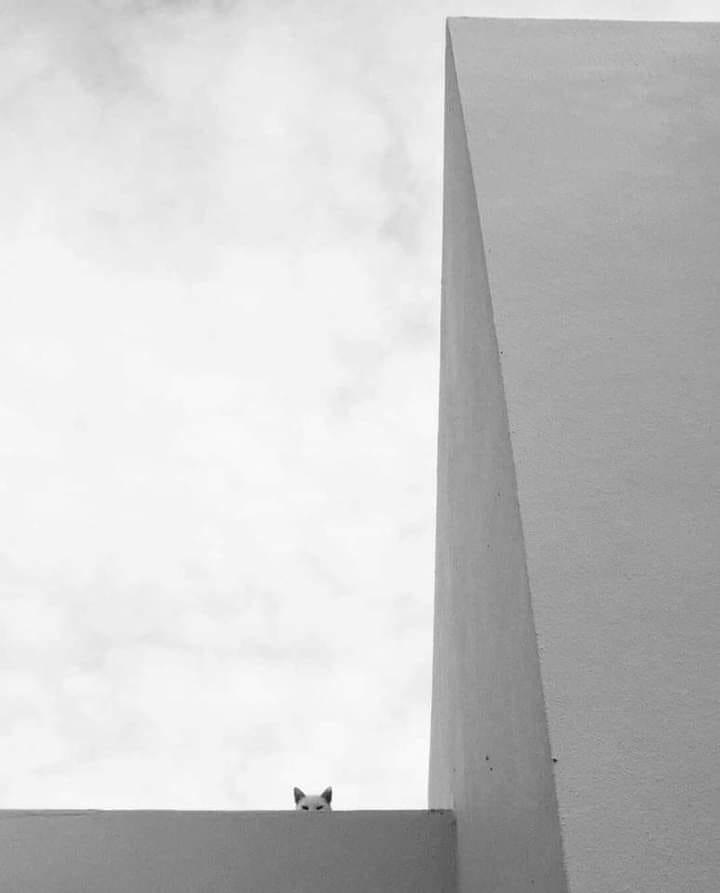La stupidità deriva dall'avere una risposta per ogni cosa. La saggezza deriva dall'avere, per ogni cosa, una domanda.  Milan Kundera (Ph Web)